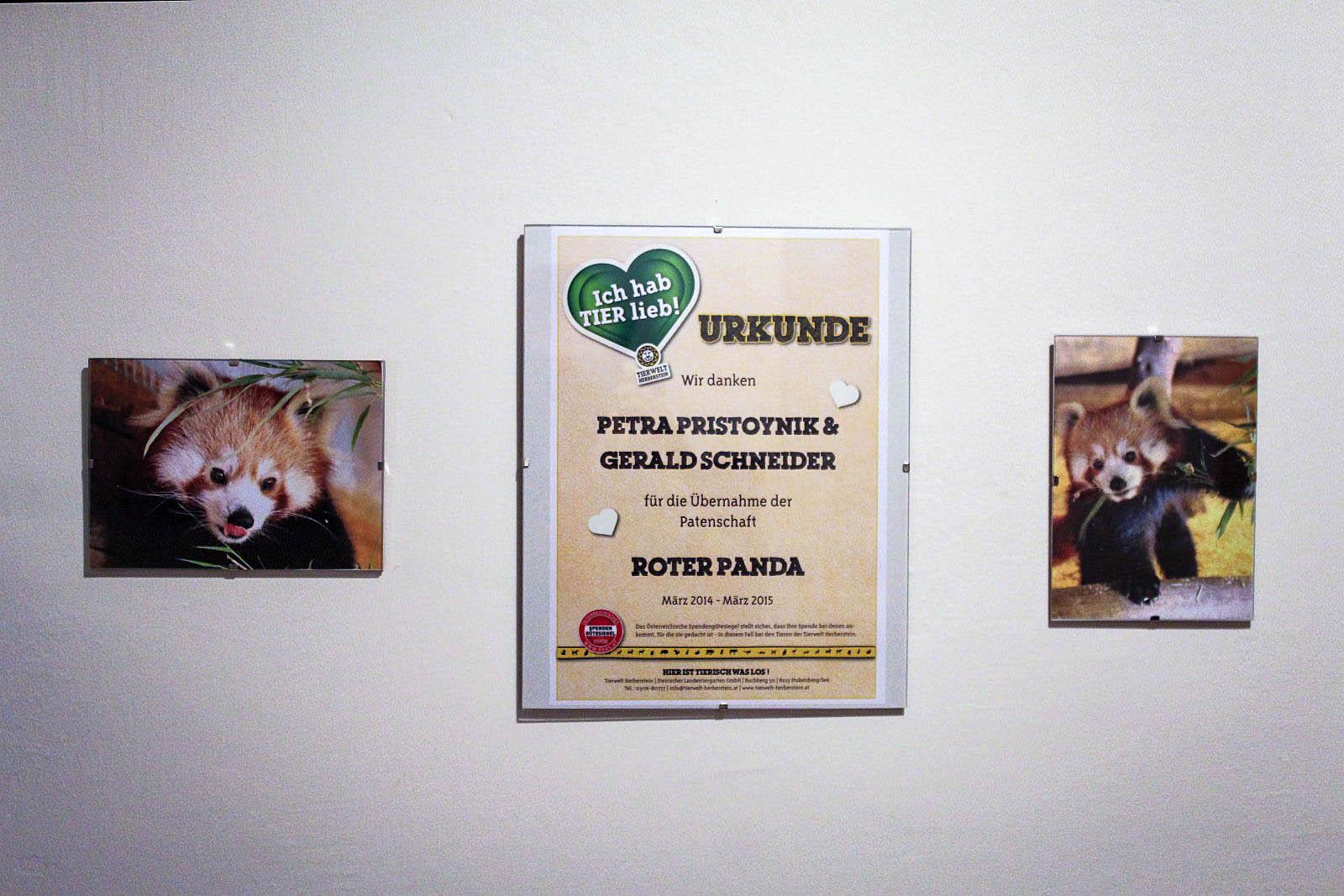 Patenschaft Roter Panda Tierpark Herberstein - Patenschaft für Roter Panda im Tierpark Herberstein
