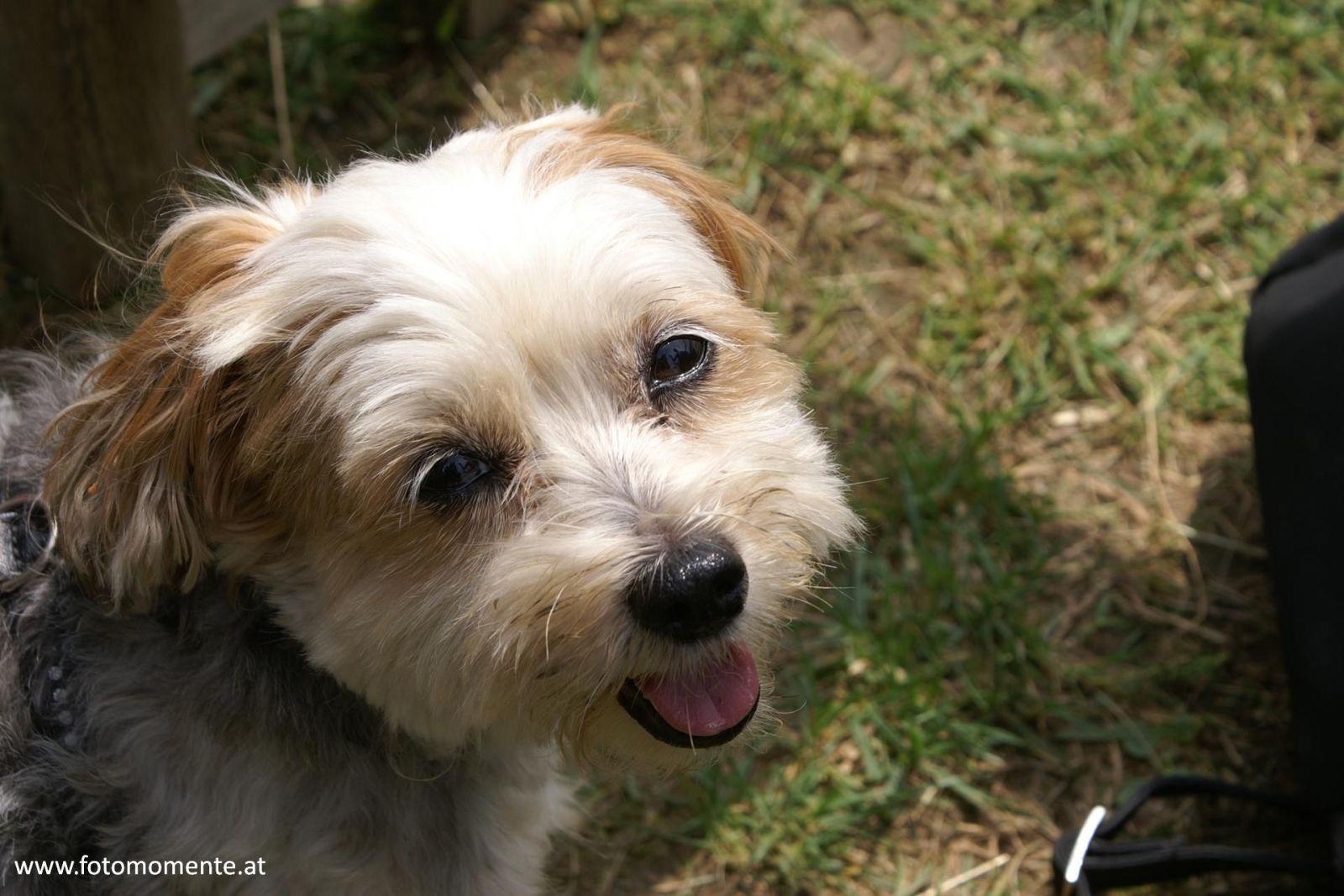 Süsser Hund / Wauzi - Gesichtsfoto