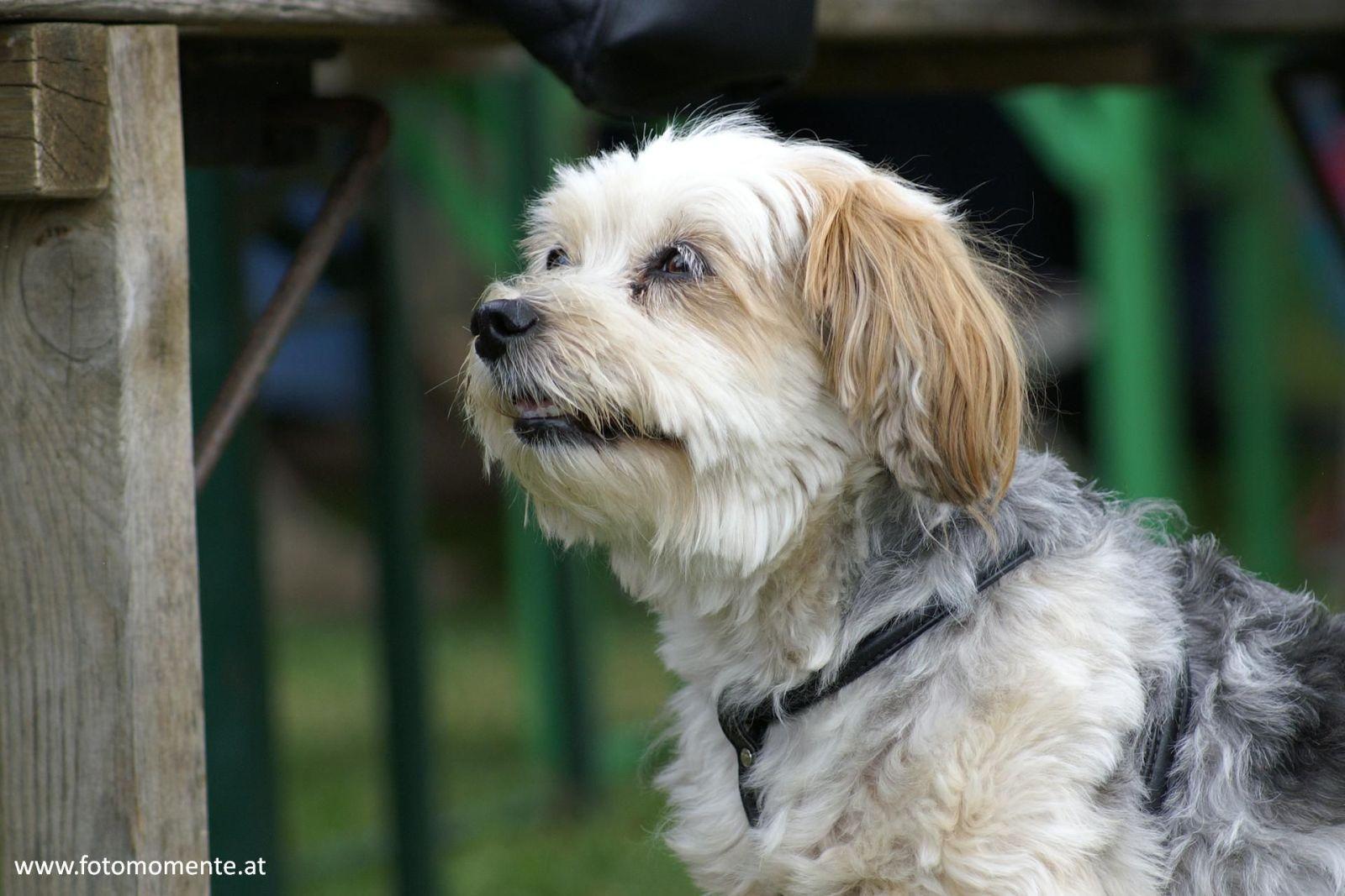 Süsser Hund/Wauzi von der Seite fotografiert