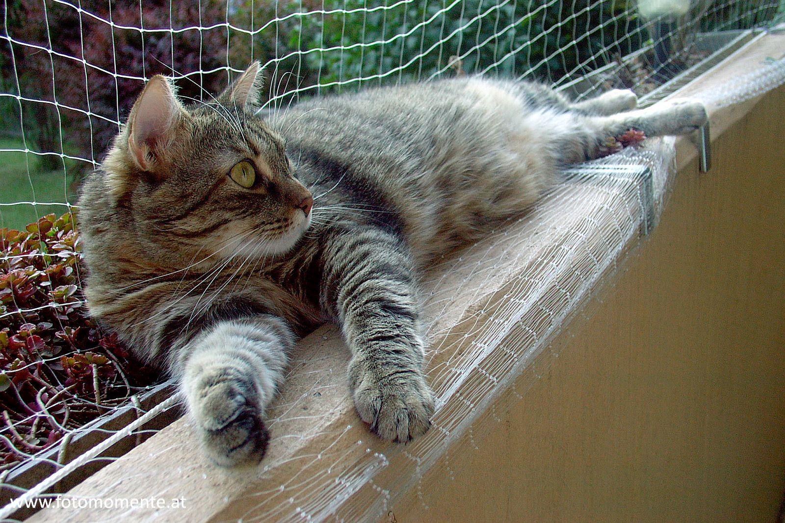 hauskatze chillen balkon - Hauskatze beim Chillen am Balkon
