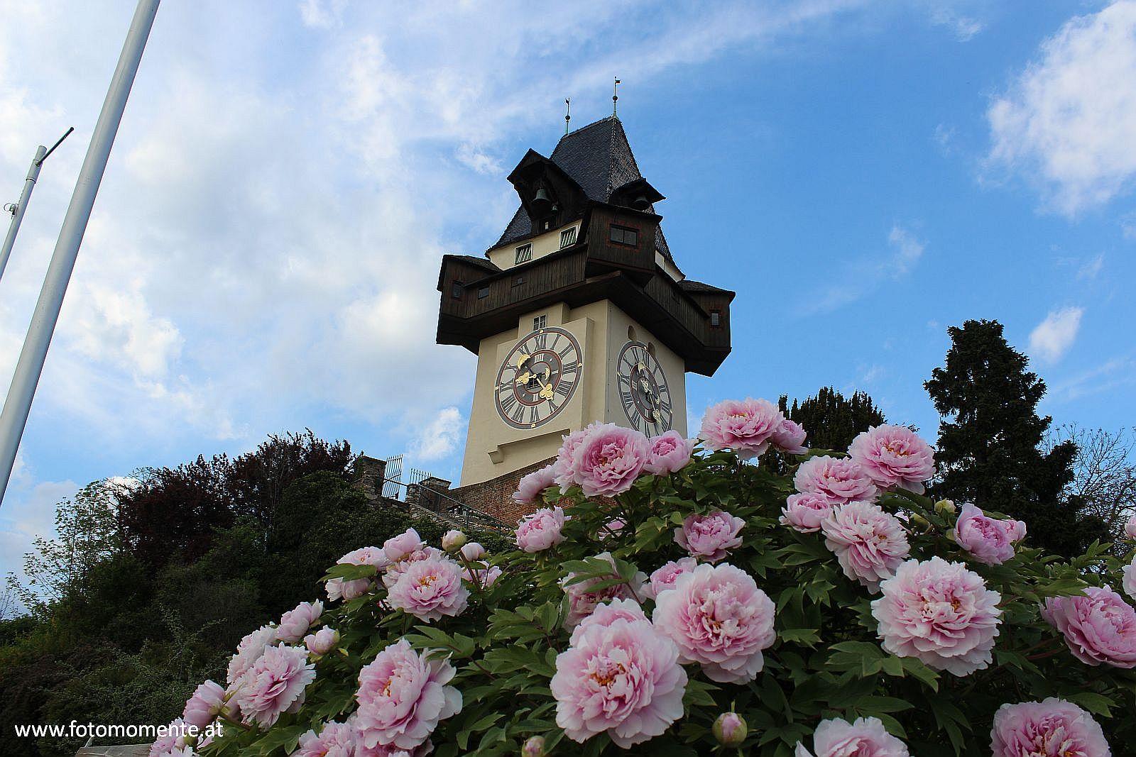 Uhrturm mit Pfingstrosen - Uhrturm am Grazer Schloßberg mit hübschen Pfingstrosen