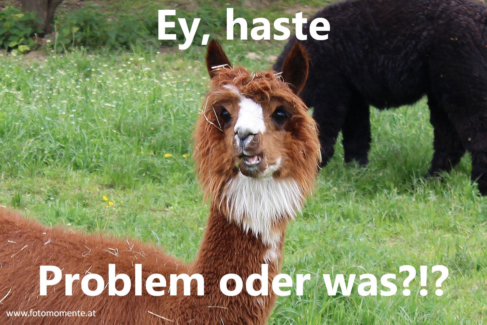 braunes alpaka jungtier problem oder was2 - Braunes Alpaka - Ey, haste Problem oder was?