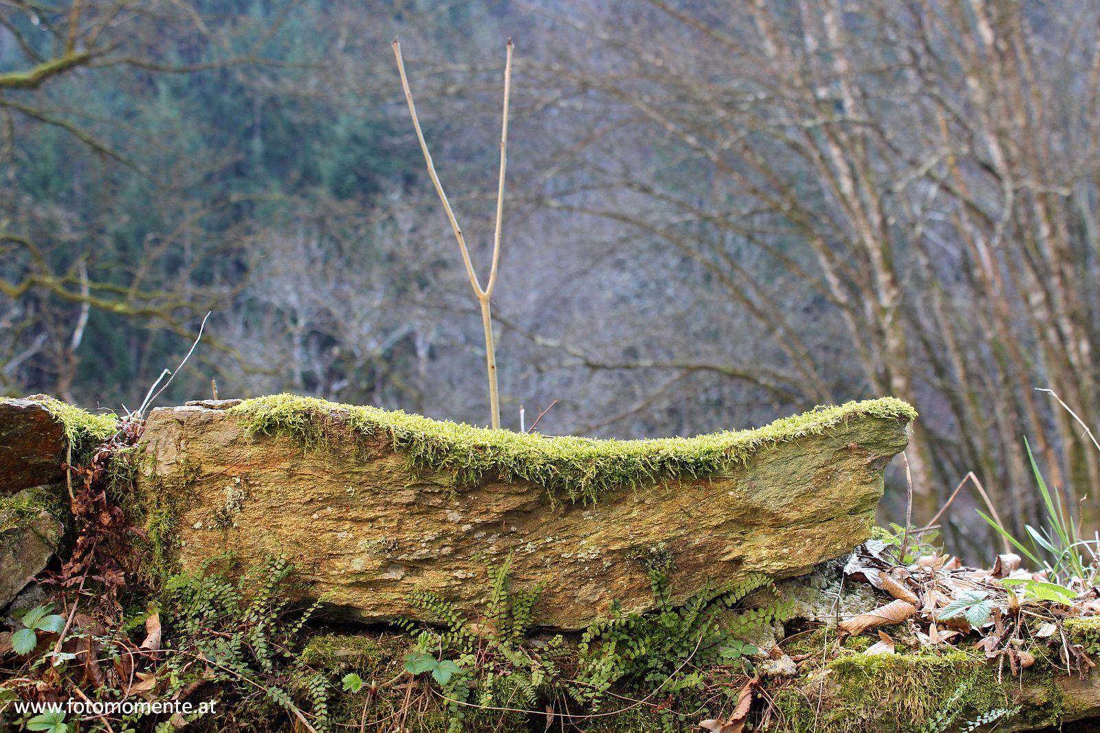 stein moos - Stein mit Moos