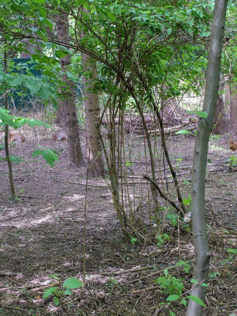 Suchbild Reh Nr1 480x640 - Wieviele Rehe verstecken sich auf diesem Foto? – Suchbild Nr.1