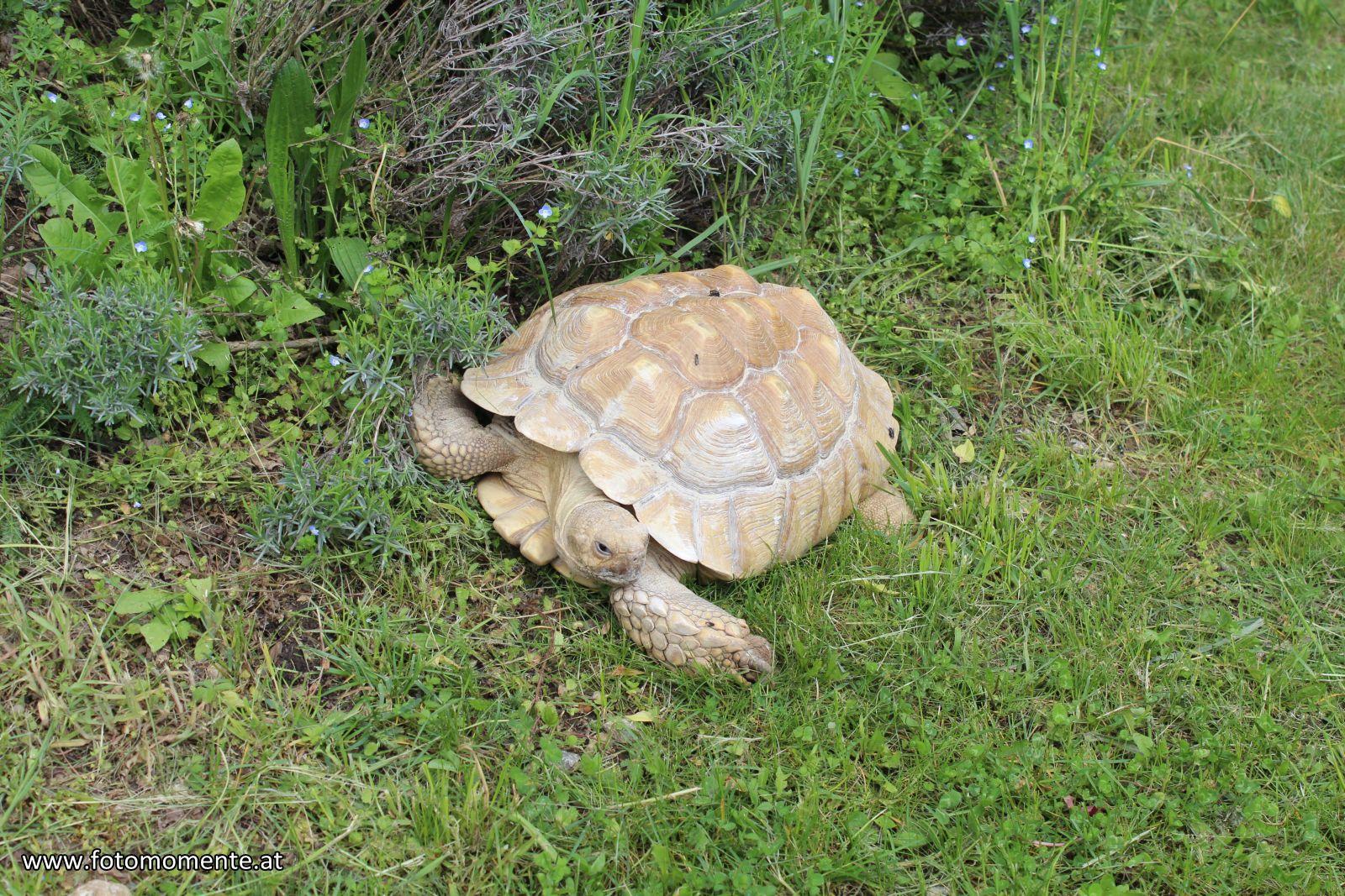 schildkroete - Schildkröte im Tierpark Herberstein