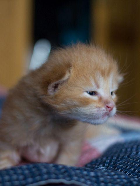 süßes braunes katzenbabys drei wochen alt 1 480x640 - Drei herzige Katzenbabys :)