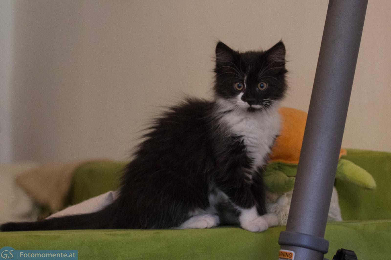 Katze Bounty Und Kater Leo 10 12 Wochen Alt Teil 1 Fotomomente