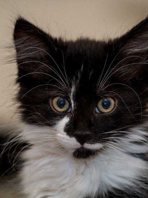 28 Katzen Bounty großaufnahme 480x640 - Katze Bounty und Kater Leo 10 - 12 Wochen alt - Teil 1