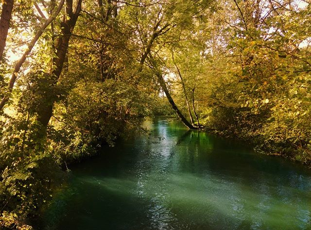 Schön, nicht wahr?#fotomomenteat #Graz #Austria #Steiermark #nature #wood #water #landscape #tree #leaf #river #environment #park #summer #outdoors #flora #season #branch #stream #lush #scenic #fall